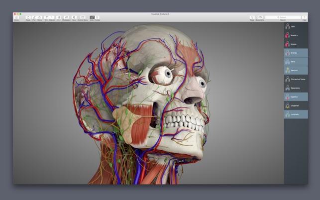 Essential Anatomy 5 For Mac v5.0.5 人体模型基本解剖